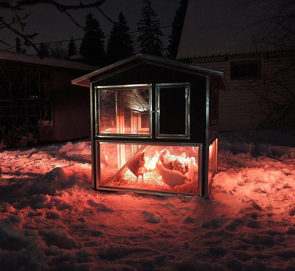 Картинка 4 - Утеплённый домик-курятник с выгулом «Зимняя мечта» на 8-12 кур.