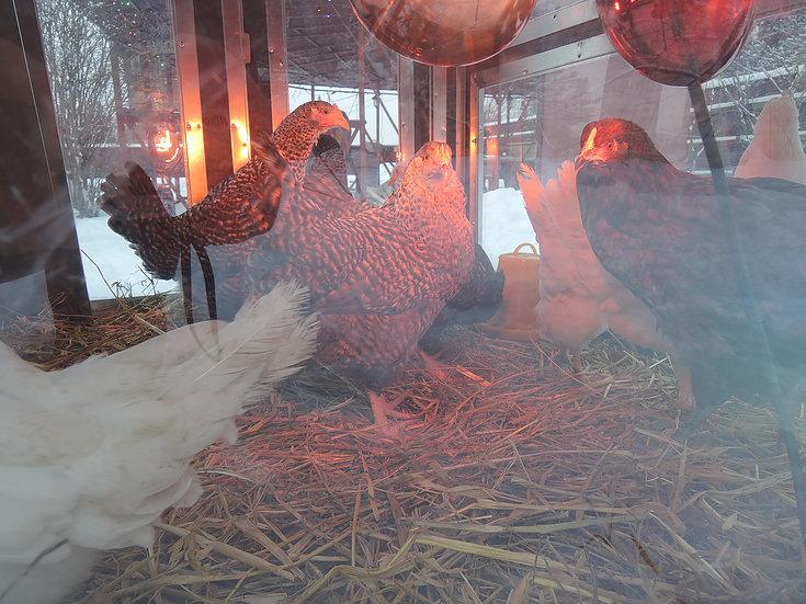 Клетки Профи 5 - Утеплённый домик-курятник с выгулом «Зимняя мечта» на 8-12 кур.