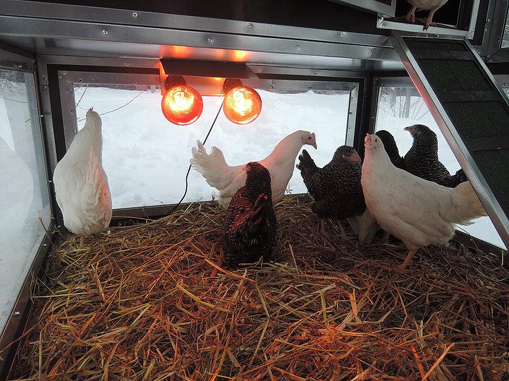 """Клетки Профи 5 - Утепленный курятник с гнездом """"Зимняя мечта"""" на 10 кур."""