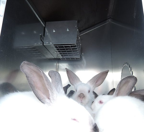 Картинка 2 - Крольчатник утепленный Бестселлер О-12.